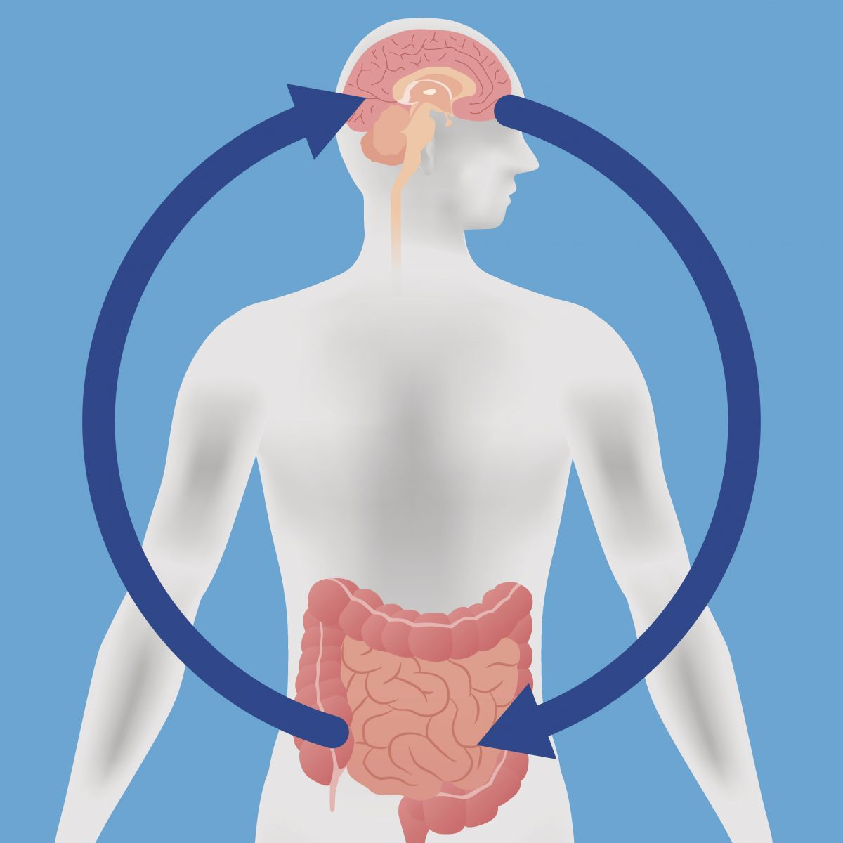 Probiotics may help boost mood and cognitive function