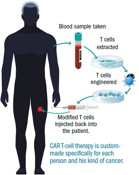 Teaching T Cells To Fight Cancer Harvard Health