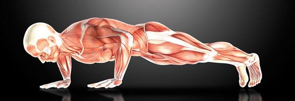 Why push-ups help beat aging - Harvard Health
