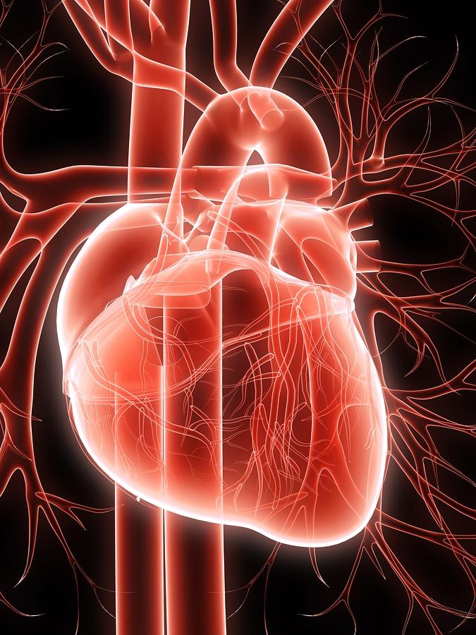Sexual health leaflets heart