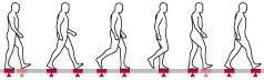 illustration of human walk cycle