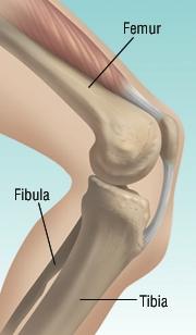 Leg Fracture - Harvard Health