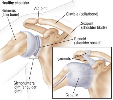 Shoulder Dislocation Harvard Health
