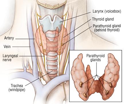 Parathyroid Cancer - Harvard Health