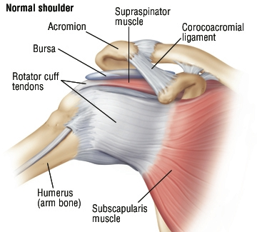 Rotator Cuff Injury - Harvard Health