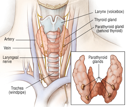 Thyroid Cancer Harvard Health
