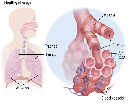 Chronic Obstructive Pulmonary Disease Copd Harvard Health
