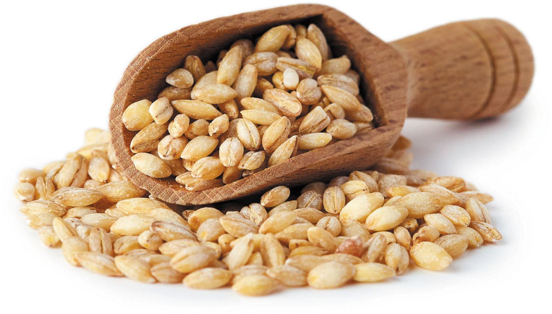 Grain of the month: Barley - Harvard Health