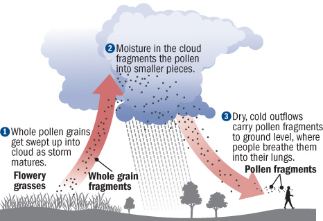 illustration of how a thunderstorm can trigger an asthma attack