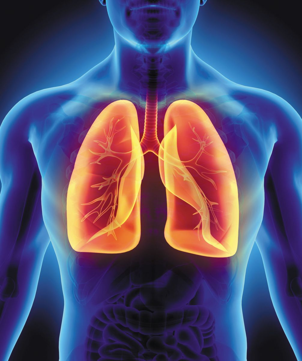 Image result for lungs