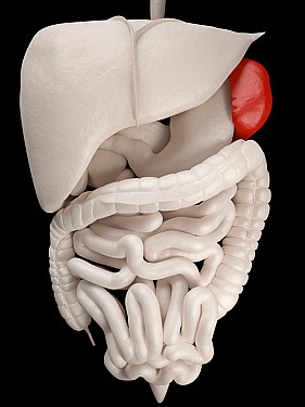 No spleen? What you need to know to stay healthy featured image
