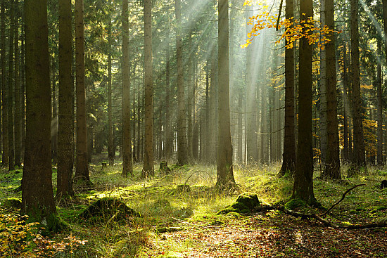 Can forest therapy enhance health and well-being? featured image