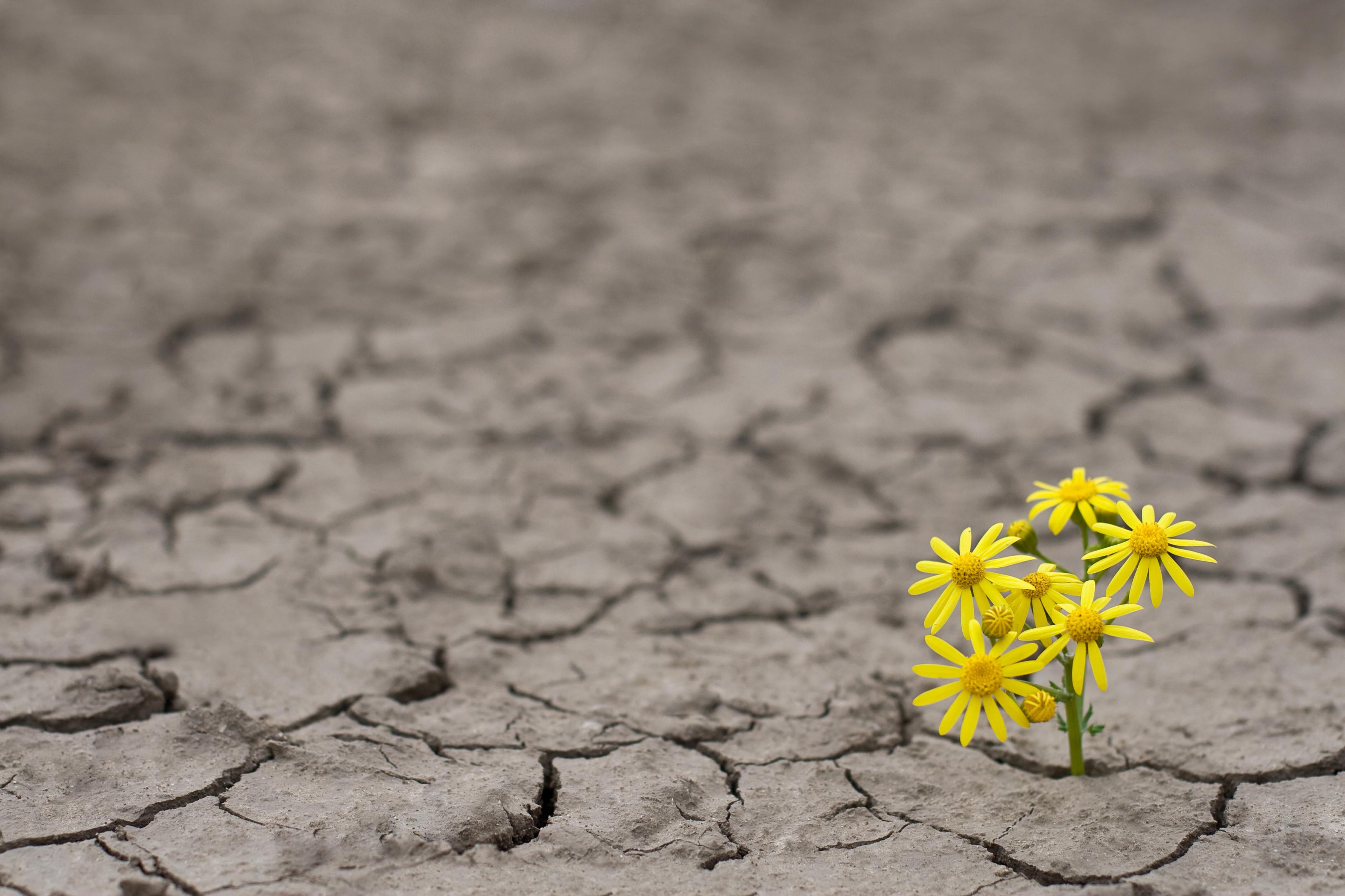 Choosing joy during difficult times