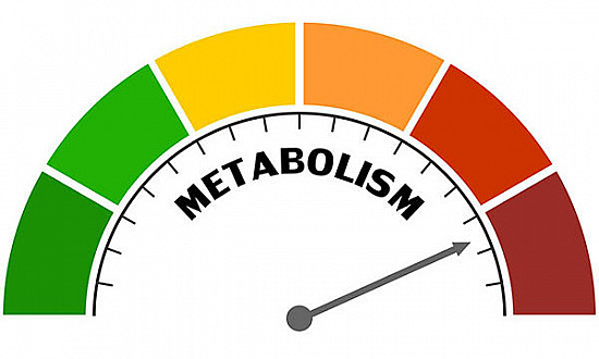 Surprising findings about metabolism and age featured image