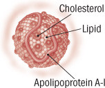 illustration of an HDL cholesterol particle