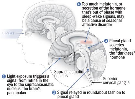 seasonal-affective-disorder-brains-that-dont-like-it-dark