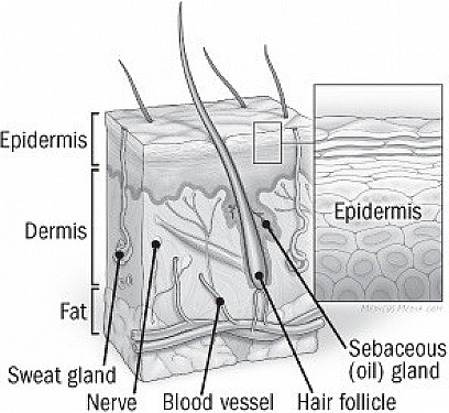 What to do about dry skin in winter featured image