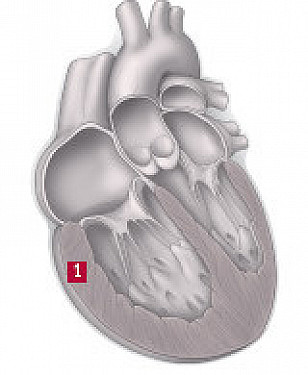 The dangers of pulmonary hypertension featured image