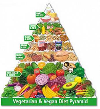 Meat eating vs vegetarian The Statistics