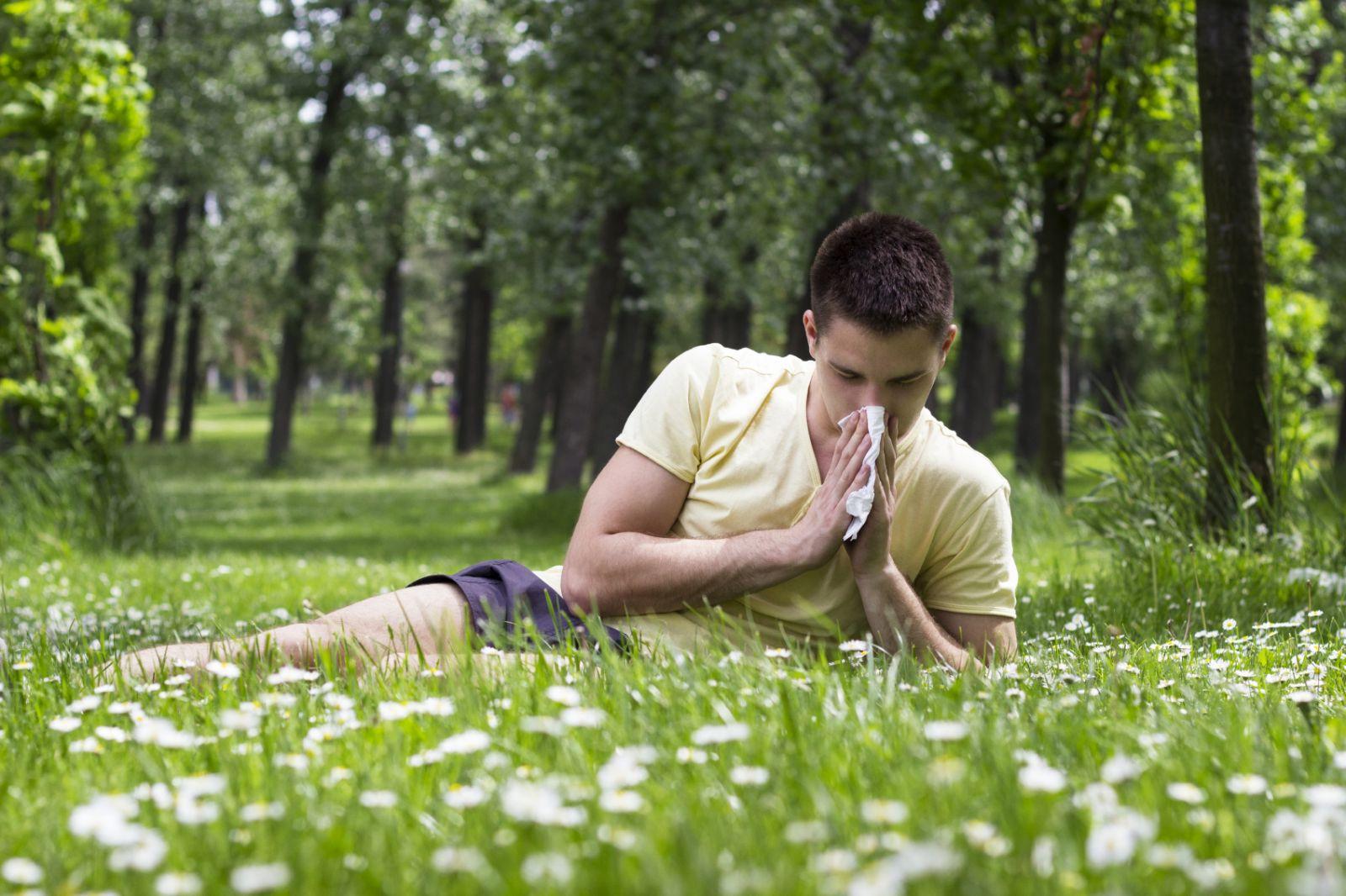 allergies hay fever allergy season