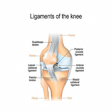 Posterior Cruciate Ligament (PCL) Injuries featured image
