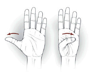 Thumb flexion/extension exercise