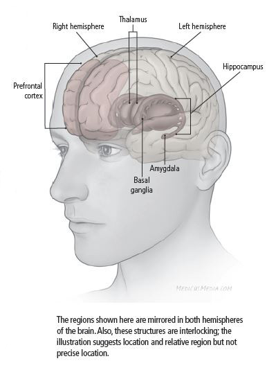 Areas of the brain affected by depression
