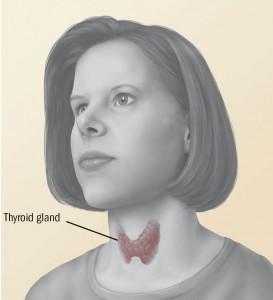 Thyroid-273x300.jpg