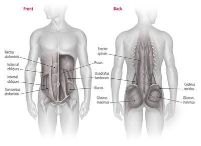 https://hhp-blog.s3.amazonaws.com/2019/08/core-muscles-small.jpg