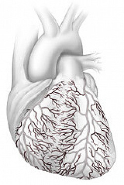 Blockages in tiny heart arteries a big problem for women featured image