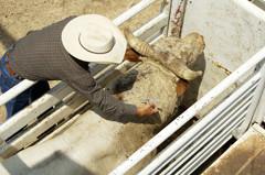Farmer-injecting-antibiotics