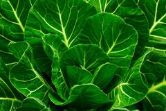 Collard-greens