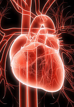 Chelation therapy offers small, if any, benefit for heart disease featured image