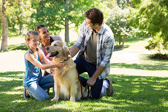 Pets can help their humans create friendships, find social support featured image