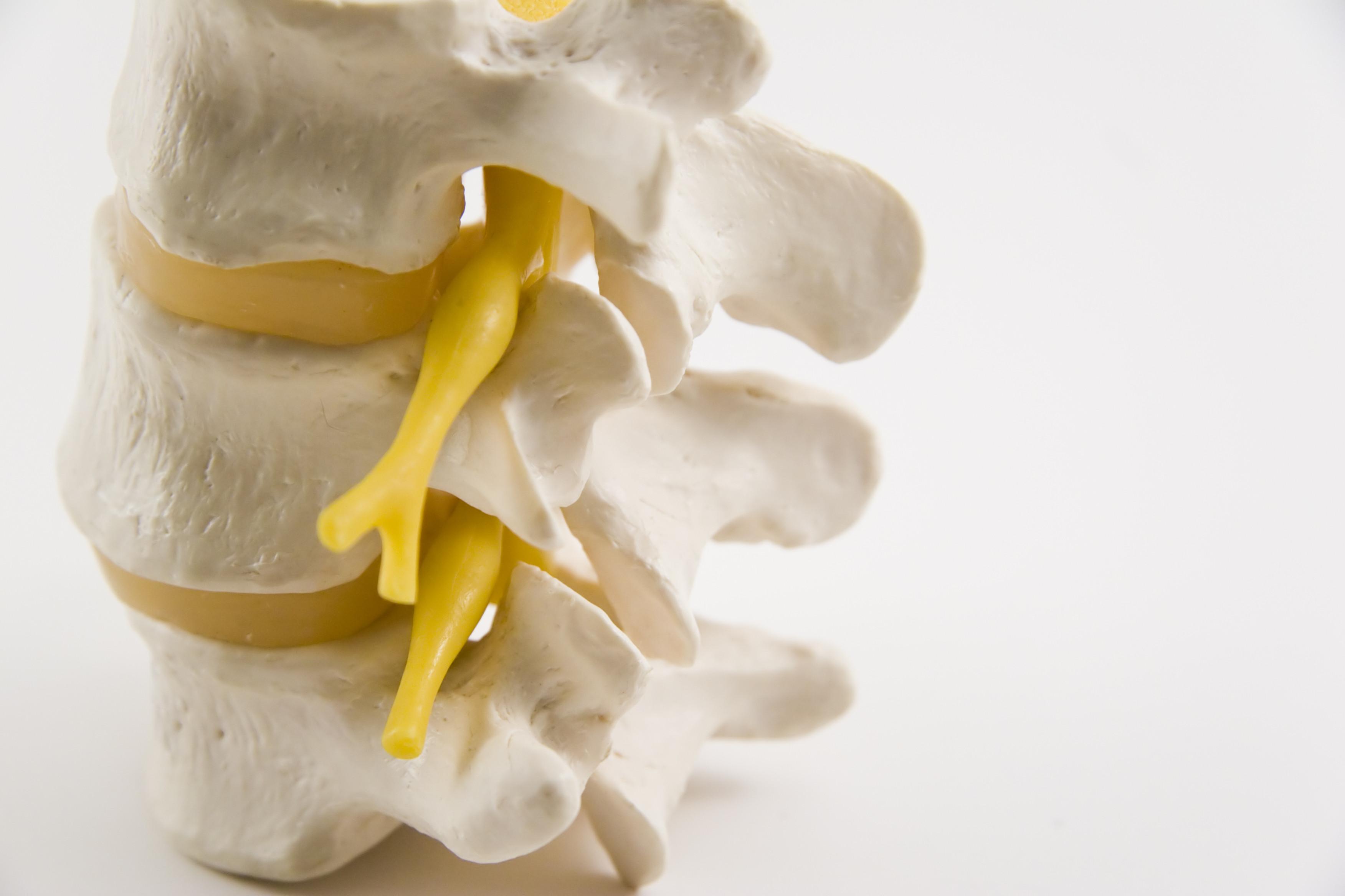 back-vertebrae-Piece-Of-Spine-391290