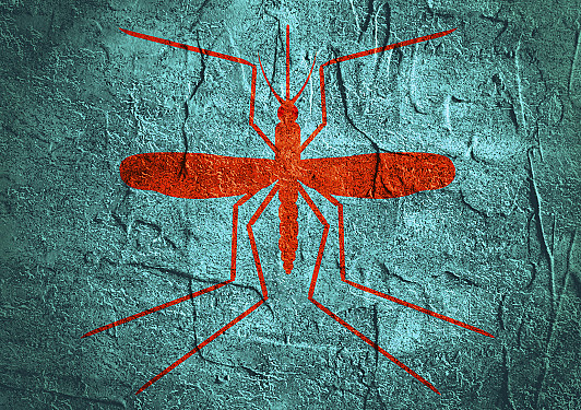 """What """"native"""" Zika infections mean for the United States featured image"""