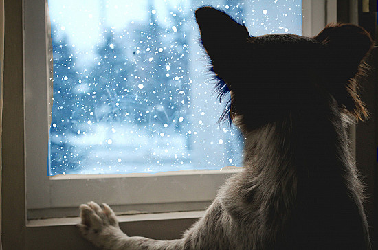 10 things you can do for your pet when it's cold outside featured image