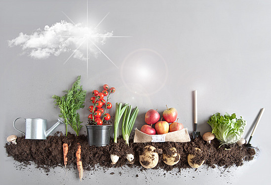 Cleaner living: Plant-friendly is planet-friendly featured image