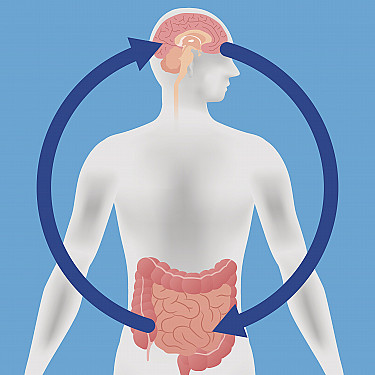 Brain-gut connection explains why integrative treatments can help relieve digestive ailments featured image