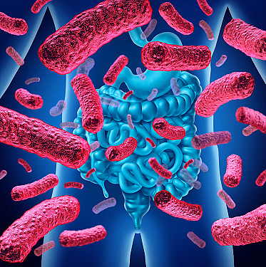 Stool transplants are now standard of care for recurrent C. difficile infections featured image